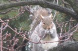 cropped-squirrels-018.jpg