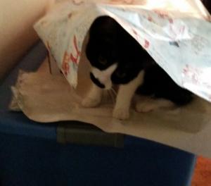 bosley wrapping janice