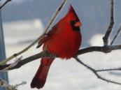 cropped-cheryl-cardinal.jpg