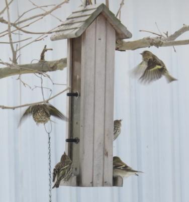 cropped-birds-cheryl.jpg