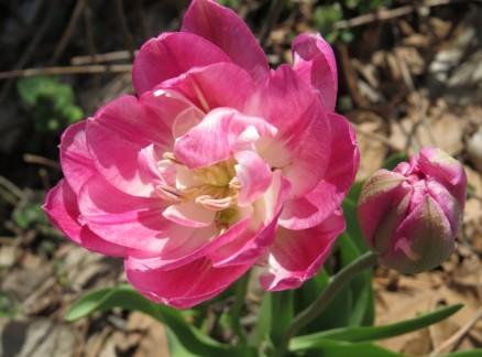 cropped-flowers-2-cheryl.jpg