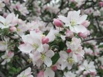 cropped-flowers-cheryl1.jpg