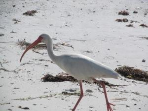 gulf bird 4