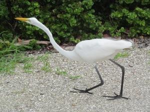 gulf bird