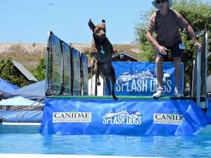 splash dogs 3- Donna