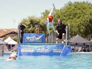 splash dogs- Donna