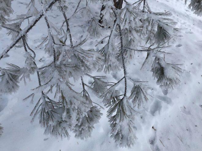 cropped-kare-winter-6.jpg